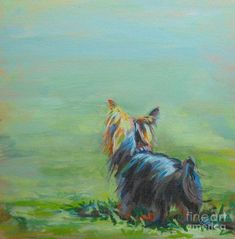Choose your favorite yorkshire terrier paintings from millions of available designs. All yorkshire terrier paintings ship within 48 hours and include a money-back guarantee. Yorkies, I Love Dogs, Cute Dogs, Yorshire Terrier, Rottweiler Puppies, Pyrenees Puppies, Poodle Puppies, Yorkshire Terrier Puppies, Yorkie Puppy