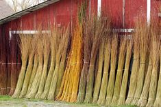 Harvested basketry willow at Dunbar Gardens; Katherine Lewis is just down the road from Swiss Family Farmhouse, www.airbnb.com/rooms/1206430