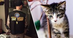 Cat Team 7 Performs Amazing Rescue Missions At Navy Base -   Cat Team 7 started in 2016 with a group of volunteers rescuing stray and feral cats on Naval Station Norfolk — the largest Naval station in the world — and its surrounding military properties.