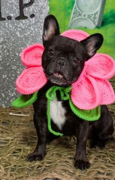 "Free pattern for ""Blooming Dog""...this would be cute as a Baby's costume too!"
