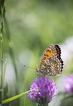 Butterfly, Nature, Grass, Wings