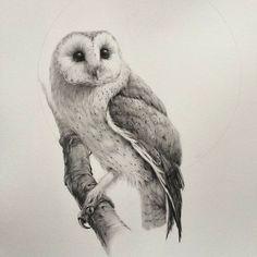 Drawn owl sketch - pin to your gallery. Explore what was found for the drawn owl sketch Owl Art, Bird Art, Owl Illustration, Illustrations, Barn Drawing, Owl Sketch, Owl Tattoo Design, Owl Pictures, Beautiful Owl