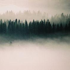 fog, trees, fog, trees, fog
