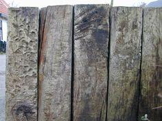 öreg tölgyfa talpfa