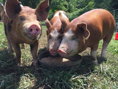 Visit www.stowefarm.org to read Wendell Berry's passage that is so poignant for these times.