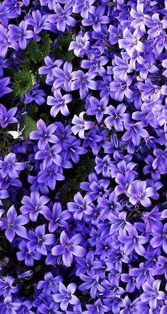 purple flowers wallpaper - Z - Plants Purple Flowers Wallpaper, Flower Phone Wallpaper, Nature Wallpaper, Iphone Wallpaper, Pastel Wallpaper, Purple Flower Background, Flower Aesthetic, Purple Aesthetic, Purple Tumblr