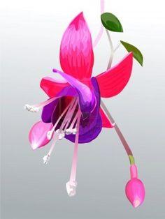 drawing fuchias | Fuschia Flower Drawing