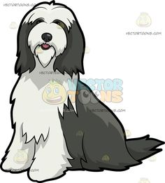 A Perked Up Bearded Collie Dog :  A dog with dark gray and white long fur black nose sitting on the floor with a very nice posture lips slightly parted to reveal a peek of a pink tongue inside  The post A Perked Up Bearded Collie Dog appeared first on VectorToons.com.  #clipart #vector #cartoon