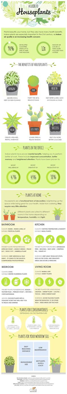 A Guide to Houseplants Infographic-You Can Grow That!
