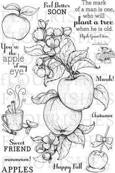 Apple of my Eye Ink Illustrations, Illustration Art, Zentangle, Apple Blossom Flower, Apple Tattoo, Card Sayings, Card Sentiments, Digi Stamps, Flower Tattoos