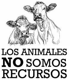 Todos los seres vivos tenemos derecho a vivir en paz.