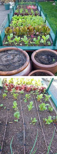 Make your own drip irrigation for system for your vegetable garden: http://community.familyhandyman.com/tfh_group/b/diy_advice_blog/archive/2012/06/05/Drip-Irrigation-for-Vegetables.aspx