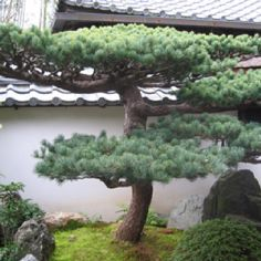 51 Best Japanese Gardens Images Garden Art Landscaping Beautiful