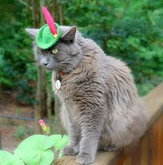 ...cats in hats?