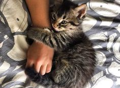 Click the photo If you'd like to see more cute cat photos – Funny Cats Cute Kittens, Animals And Pets, Baby Animals, Cute Animals, Cute Cats Photos, Gatos Cats, Photo Chat, Cat Behavior, Mundo Animal