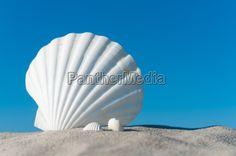 Weiße Muscheln im Sand - Stock-Foto - Bild-Nr.: 14304349