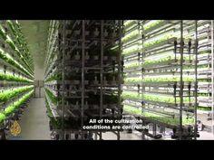 Earthrise - Japan's Future Farms - YouTube