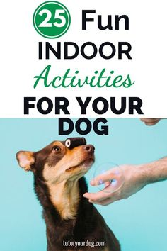 How can you keep your dog entertained indoors? Check out our 25 fun indoor activites for dogs. Keep your dog happy with these fun indoor games for dogs. Click through to read the article. Fun Indoor Activities, Dog Activities, Indoor Games, Summer Activities, Online Dog Training, Best Dog Training, Brain Training, Training Tips, Brain Games For Dogs