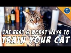 The Best and Worst Ways to Train Your Cat