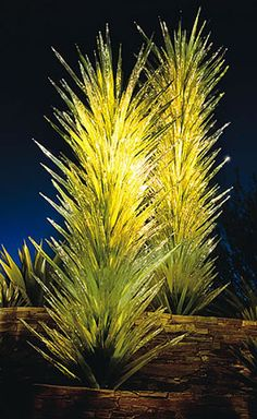 Chihuly Glass at Desert Botanical Garden, Phoenix. (Dale Chihuly is an artist who works with glass.)