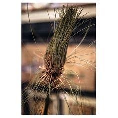 The Papyrus plant wa