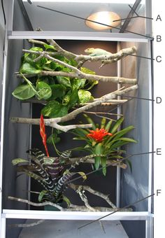 How To Set Up A Proper Chameleon Enclosure