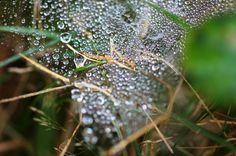 Itsi Bitsi Spider...