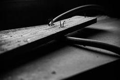 Výsledek obrázku pro hřebík ve dřevě
