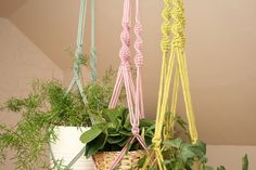 Excited to share this item from my shop: Macrame Plant hanger // Hanging Planter // Plant Holder // Soft Cotton // Handmade // Primrose Pink // Pistachio Green // Pastel Green Primroses, Pistachio Green, Macrame Plant Hangers, Cotton Rope, Hanging Planters, Plant Holders, Garden Tips, Happy Shopping, Pastel