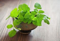 15 Household Uses for Mint - Love my mint - always growing in my garden! I even keep it going during our winter by bringing it over near a sliding glass door -so it gets escaped heat from the house- and covering it with a large plastic bag to keep it worm on cold winter nights.