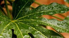 Brumiser les plantes d'intérieur