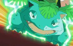 Green Pokemon, Pokemon X And Y, Pokemon Gif, Pokemon Cards, Venusaur Pokemon, Bulbasaur, Pokemon Stories, Pokemon Breeds, Cute Pokemon Pictures
