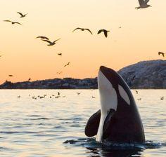 Orcas Island of the San Juan Islands, Washington  http://www.orcasislandwhalewatchingtours.com/mobile/index_mobile.html