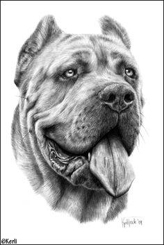Cane Corso Dago, pencil drawing Art by Kerli, Realistic Animal Drawings, Pencil Drawings Of Animals, Animal Sketches, Art Drawings Sketches, Cool Drawings, Chien Cane Corso, Dog Pencil Drawing, Cartoon Dog, Dog Portraits