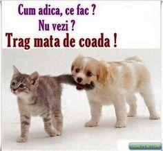 Stupid Funny Memes, Funny Quotes, Funny Stuff, Meme Gen, Romanian Language, Sarcastic Humor, Animals And Pets, Haha, Puppies