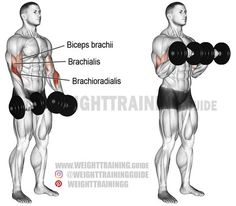 Dumbbell reverse curl. An isolation exercise. Target muscle: Brachioradialis. Synergists: Biceps Brachii and Brachialis.