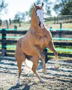 Horseback Riding Camps Are An Adventure! - Basic Guide About Horse Quarter Horses, American Quarter Horse, Pretty Horses, Beautiful Horses, Animals Beautiful, Beautiful Gorgeous, Horse Markings, Palomino, Types Of Horses
