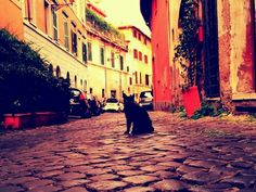 The cats of Rome...