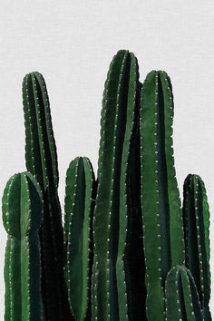 Cactus Poster artboxONE – Best Garden Plants And Planting Plant Wallpaper, Wallpaper Backgrounds, Cactus Backgrounds, Cacti And Succulents, Cactus Plants, Indoor Cactus, Indoor Plants, Cacti Garden, Tall Plants