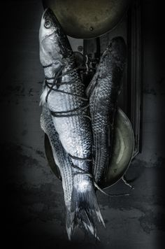 "Stylisme culinaire photographie ""Poisson"" Food Styling Photography ""Fish"" Création Inspiration Lumière Contraste Couleurs Texture Photographe: j. Ph. Mattern Styliste: Stéphanie Rouffart"