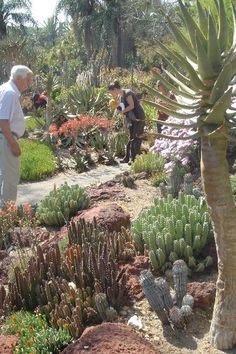 This is one beautiful place...Huntington cacti garden
