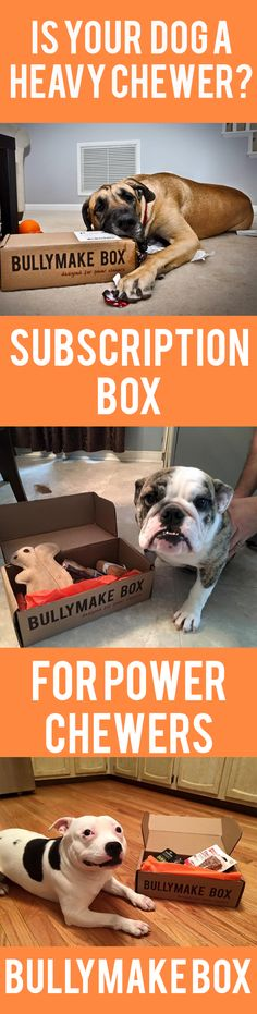 Is your dog a POWER CHEWER?  Bullymake Boxes are filled with LONG LASTING toys and treats that are delivered every month to your door!  Join 1000's of other happy pooches of all sizes, shapes, and weights today and treat your pup to a pawesome dog subscription!   Visit http://bullymake.com for yours.  Repin this pin if your pooch is a heavy chewer! :)