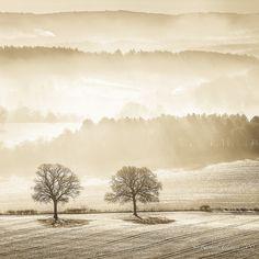 Morning, Newlands Corner - Land