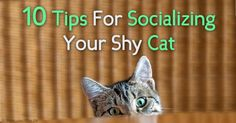 A crucial step in helping a shy cat feel more confident and sociable is by providing him a calm, stable environment and consistent daily routine. http://healthypets.mercola.com/sites/healthypets/archive/2015/11/15/socializing-shy-cats.aspx