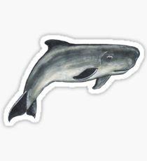 Dwarf sperm whale - Animal series Sticker
