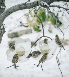 Steel Magnolia Bird Feeder | Hang up this bird feeder in the yard for a bit of natural beau... | Bird Feeders