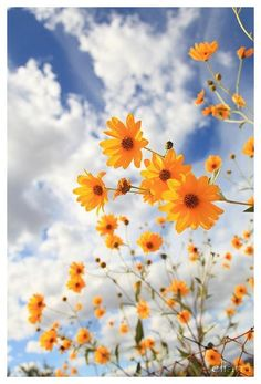 Flowers For You, Flowers Nature, Yellow Flowers, Wild Flowers, Beautiful Flowers, Happy Flowers, Photos Of Flowers, Blue Daisies, Rainbow Flowers