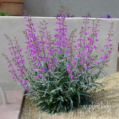 Drought Tolerant Gardening | Fire Resistant Plants for Your Landscape