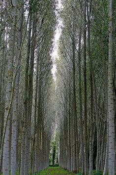 .amid the trees.                   t