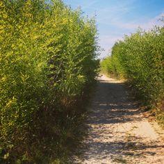 Avontuurlijke paden door de bamboe